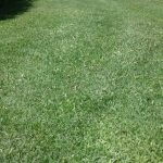 Do you want stunning lawns in Dunsborough or surrounds?