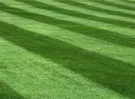 Dunsborough lawnmowing